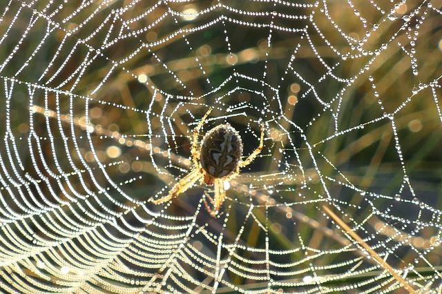 Aracnipedia ara as enciclopedia ilustrada - Como hacer tela de arana ...