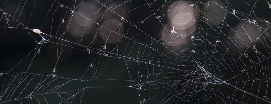 Anatomía de la araña » ARACNIPEDIA